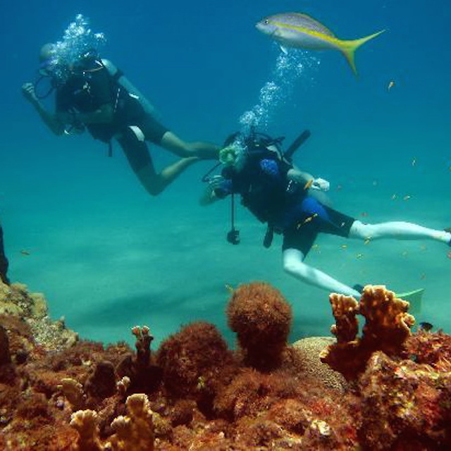 northern-coast-diving-1